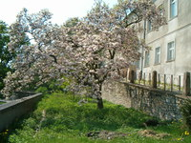 Galeria Krapkowicki Zamek